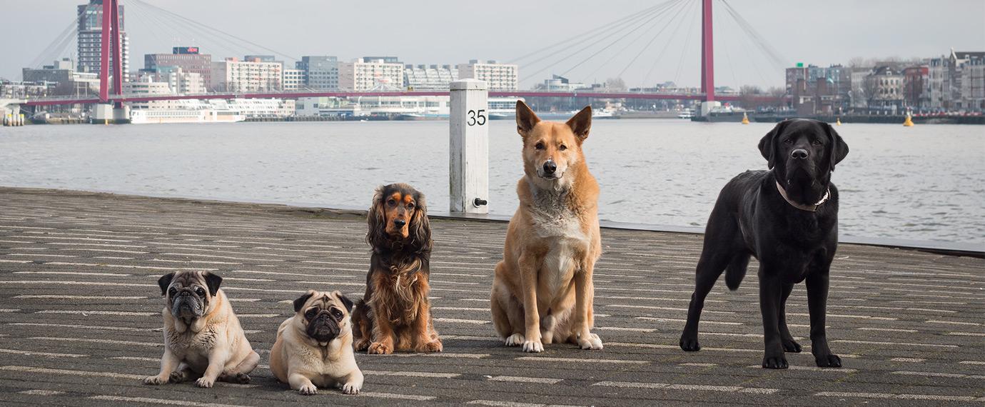 Hondenfotograaf-Rotterdam