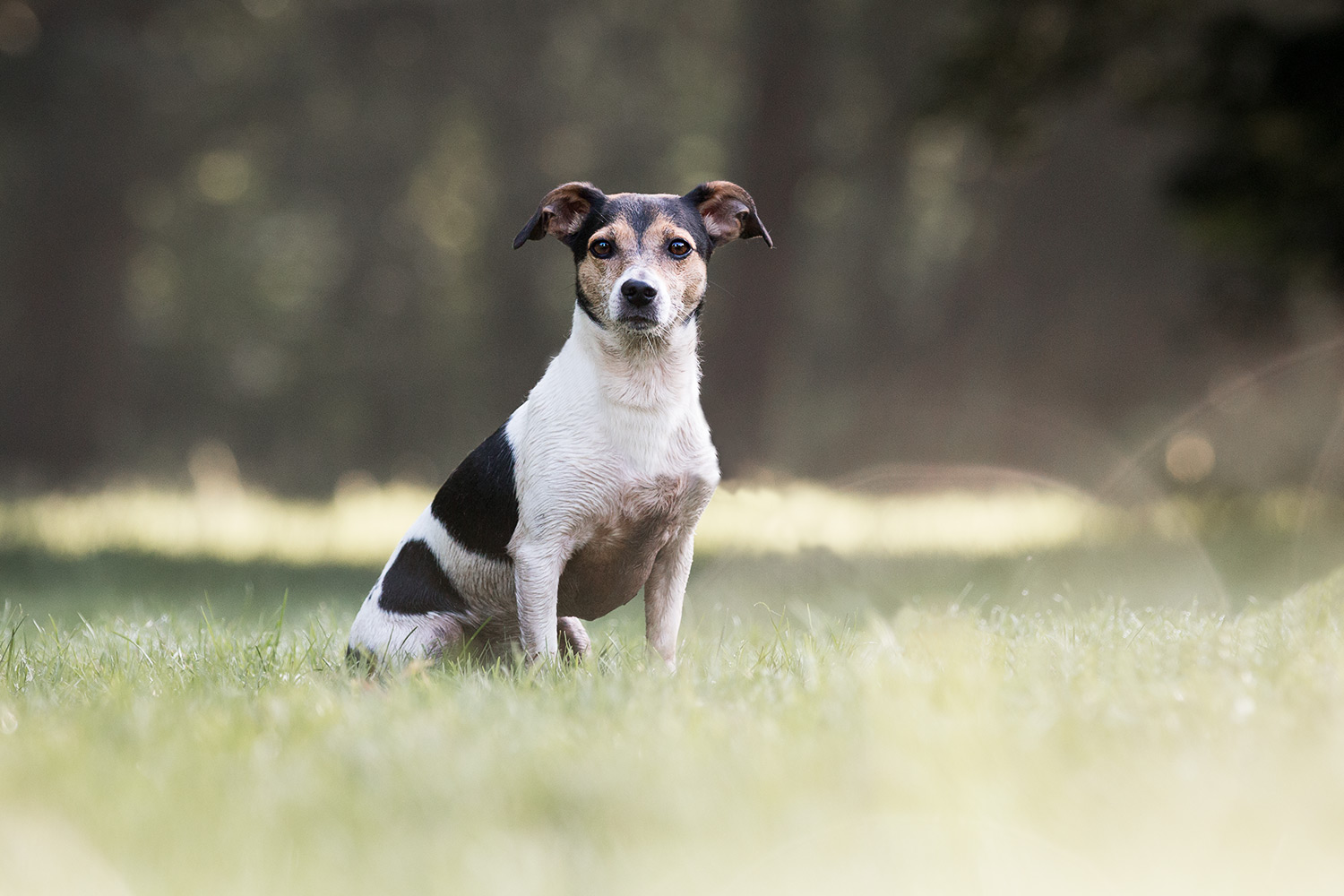 Jack-russell-fotoshoot